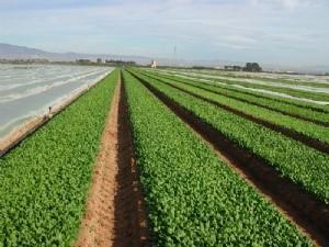 Agricultura respalda la presencia de las empresas murcianas en la feria  de agricultura ecológica-orgánica Biofach