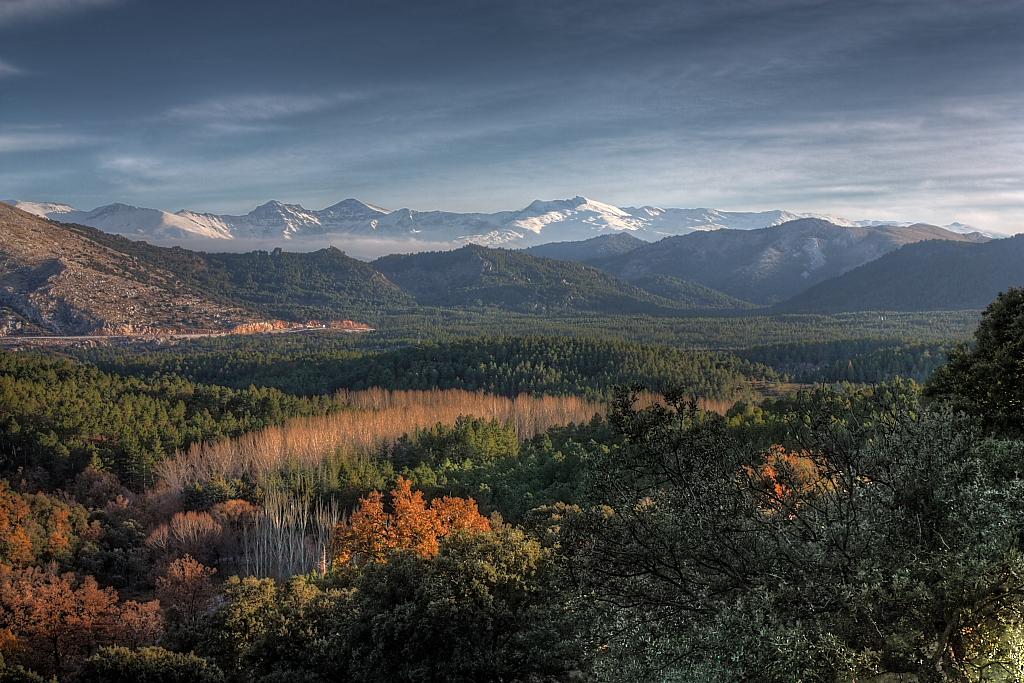 Un estudio evidencia la falta de conocimiento sobre la reacción de los bosques ibéricos al cambio climático