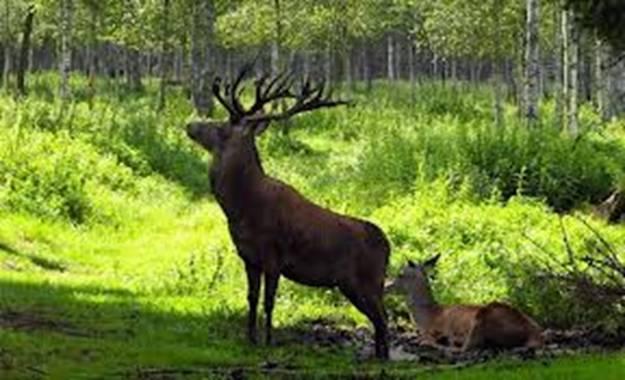 Expert en recursos forestales y faun sticos o la gesti n for Importancia economica ecologica y ambiental de los viveros forestales