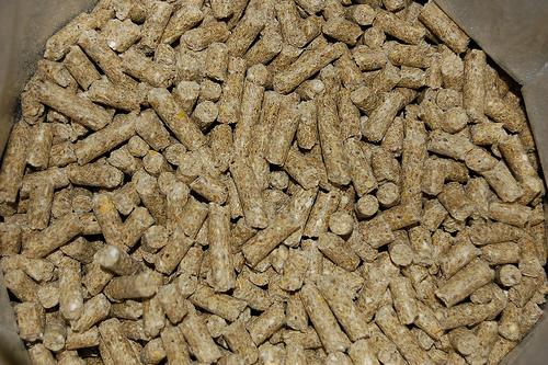 Biomasa, una energía renovable de gran futuro