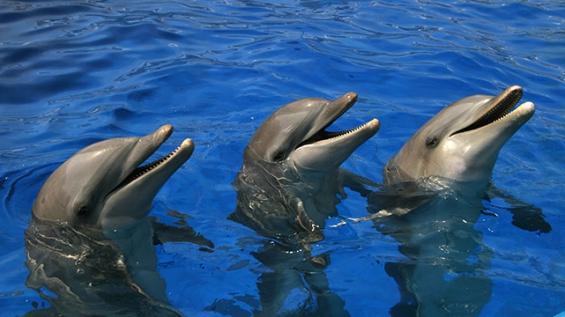 México erradica los espectáculos fijos e itinerantes con mamíferos marinos