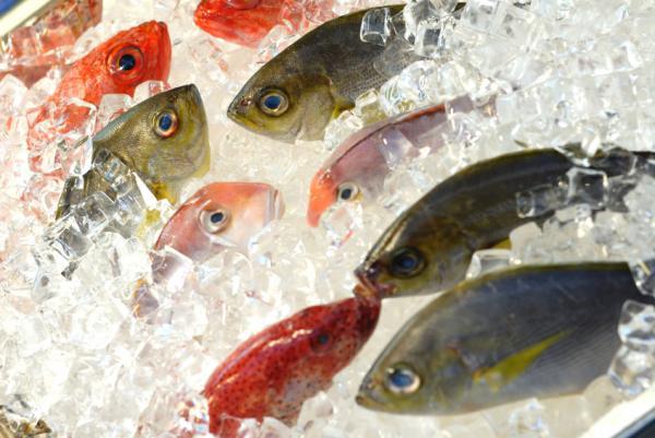 La pesca sostenible es rentable