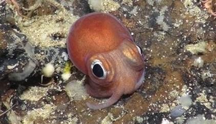 Investigadores advierten de la existencia de brechas en el conocimiento básico de la vida marina profunda