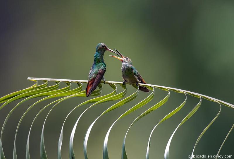 Costa Rica. Miles de aves empiezan a anidar