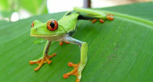 Fundación FAADA. Viaje a Costa Rica en el marco de la campaña de Turismo Responsable con los animales r