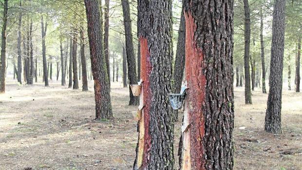 La sequía 'planea' sobre todos los bosques del planeta