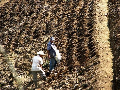 Agricultores ecológicos de tiempo libre