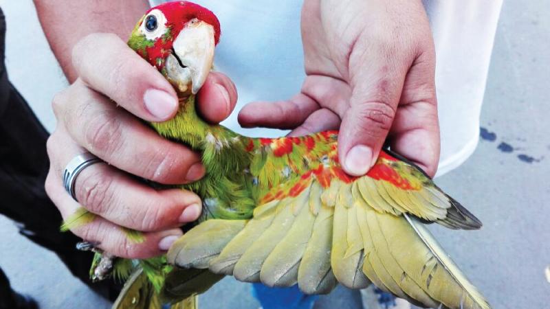 Ciudadano fue sentenciado a un año de prisión por delitos de tráfico de fauna silvestre en Manabí