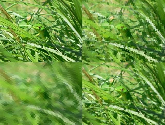 Innovadora aplicación obtiene imágenes desde el prisma de un animal