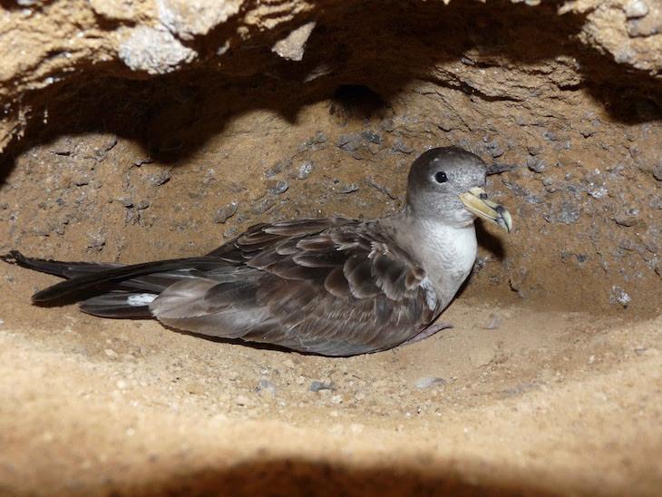 La contaminación lumínica es 'nefasta' para las aves