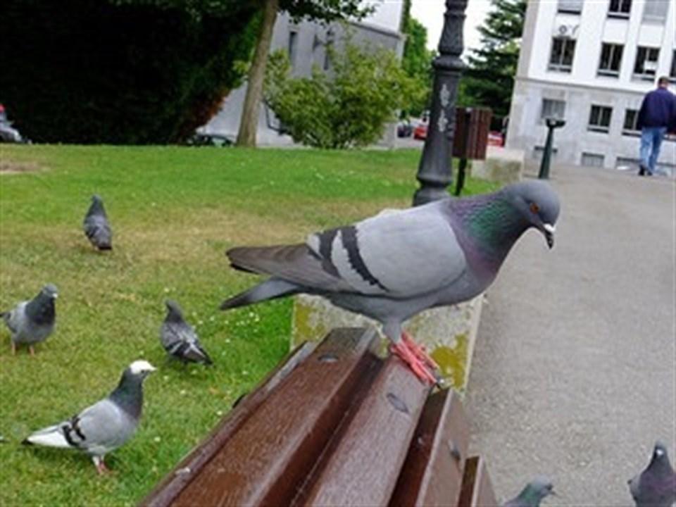 Promueven una campaña para evitar la presencia de palomas y gaviotas en las terrazas hosteleras