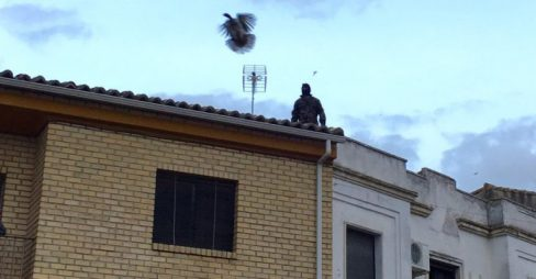 La 'aberración' del lanzamiento de la pava de Cazalilla