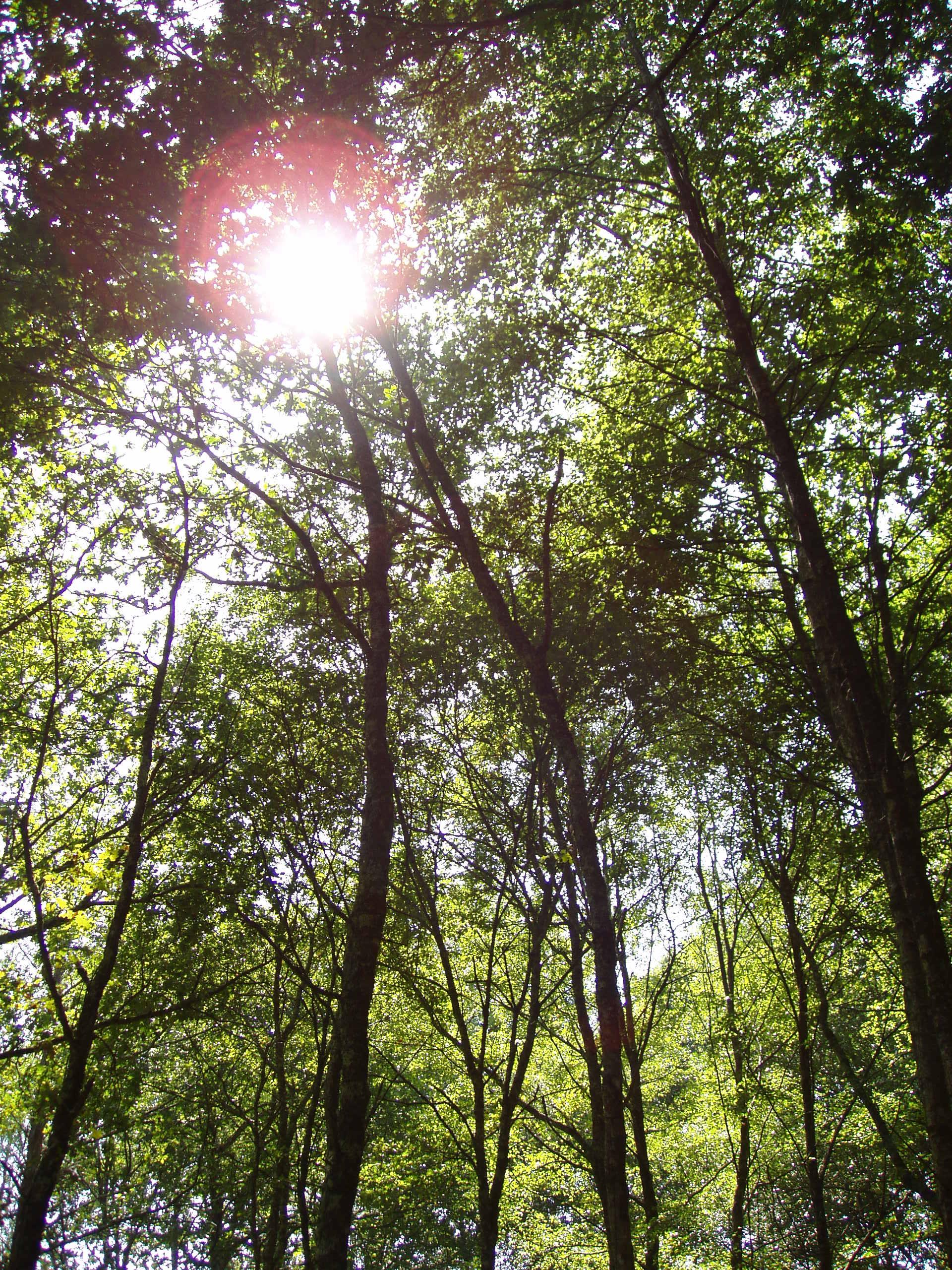 El MAPAMA destina 16,3 millones de euros al desarrollo de planes medioambientales y a la lucha contra el cambio climático