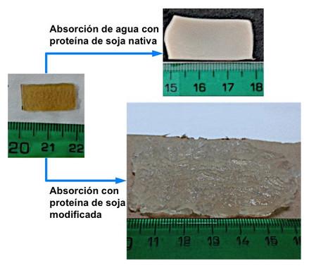 Un bioplástico superabsorbente fabricado con proteína de soja