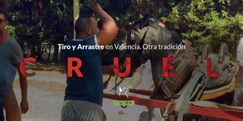 Tiro, arrastre y maltrato animal en Valencia