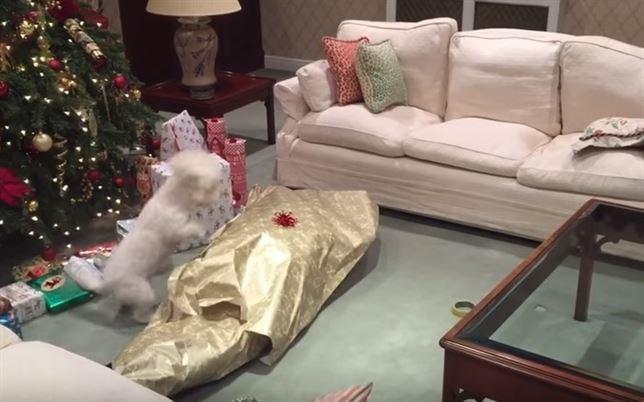 El perro que recibe su regalo de Navidad (Vea VIDEO)