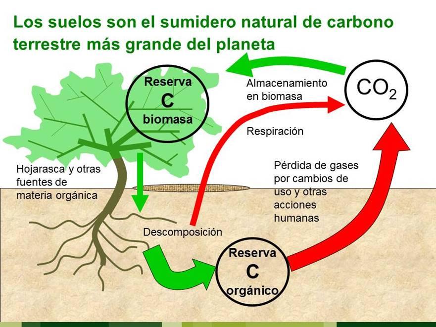 Los suelos forestales españoles acumulan tanto carbono como el que su población emite en 29 años