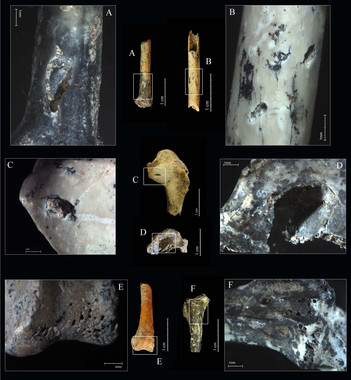 Novedades y sorpresas sobre las aves del Paleolítico medio