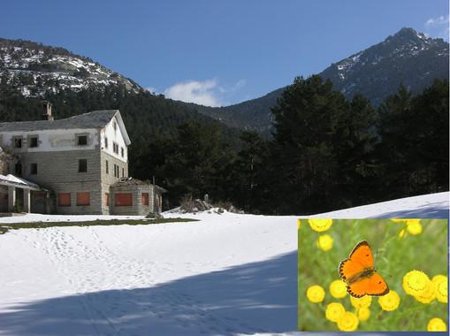 Las mariposas de la Sierra de Guadarrama se 'mudan' al ático