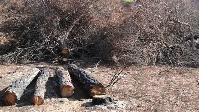 Sevilla prevé talar casi cien árboles por los