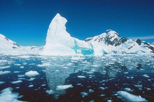 El deshielo del Ártico altera la migración de las aves marinas