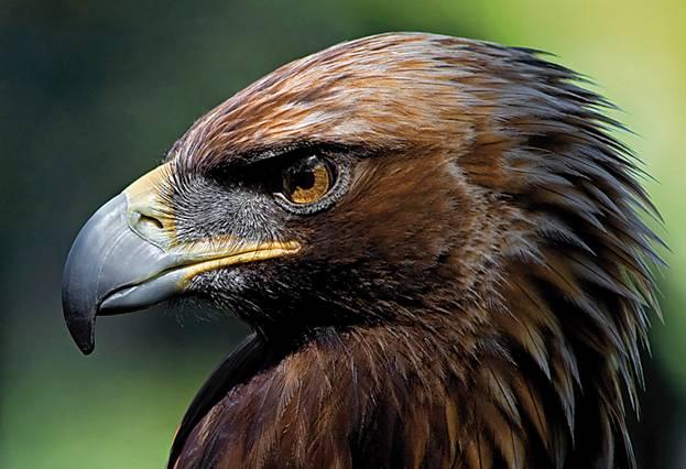 800.000€ de fianza por envenenar seis águilas imperiales