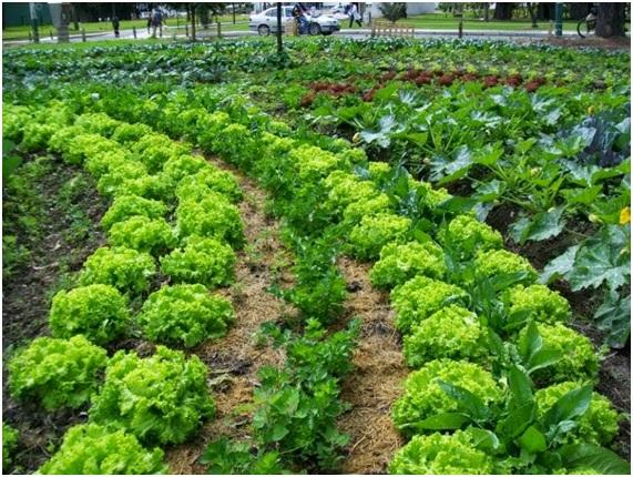 Pesticidas naturales plantas tiles para tu huerta org nica for Plantas para huerta organica