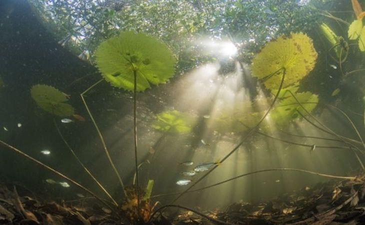 ¿Qué se oculta en los manglares rojos de Yucatán?
