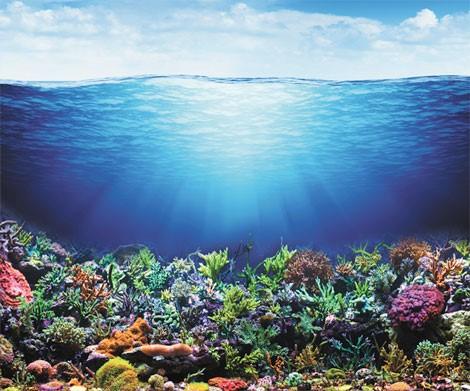 Master en Gestión Sostenible de los Sistemas Costeros y Marinos, ¿te interesa?