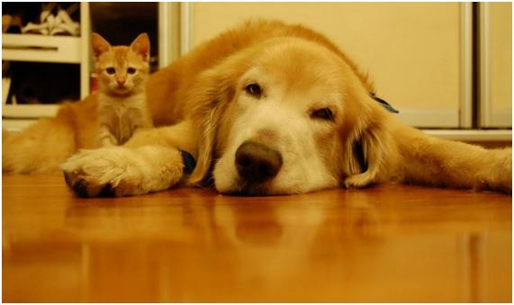 10 mitos sobre los perros que te sorprenderán