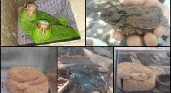 México. Secuestran 318 especies en riesgo que iban a ser vendidas de forma ilegal