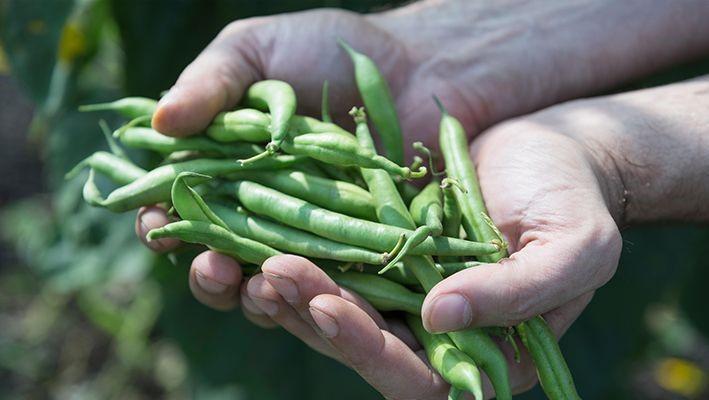 Alimentos ecológicos, orgánicos y bio, ¿qué diferencias hay entre ellos?