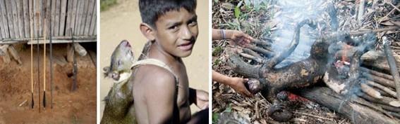 Los monos de la selva peruana, la Ley y los indígenas