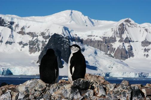 Investigadores detectan elementos contaminantes en los pingüinos de la Antártida