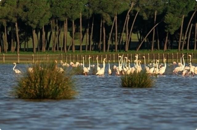 Junta de Andalucía reitera el buen estado de Doñana y dice que invitará a la Unesco a visitarlo