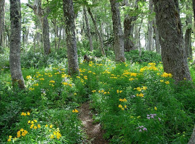 Castilla y León pone en marcha un programa de apadrinamiento de bosques sin planificar dirigido a empresas y particulares