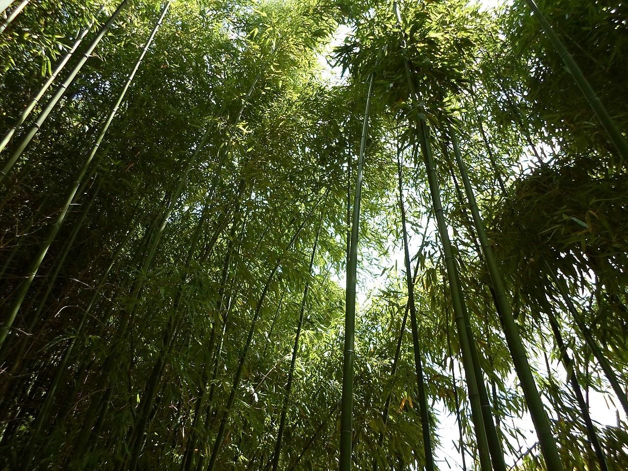 Secuestrando CO2 de forma 'natural'