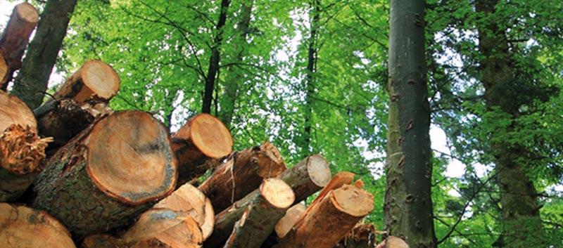 Las entidades forestales piden a la Administración una guía de actuación en materia forestal