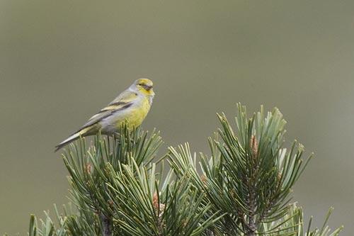 La diversidad de aves es más importante que su cantidad para la conservación de ecosistemas forestales