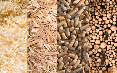 Curso de Energía de la Biomasa, no te lo puedes perder