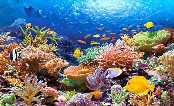 El 'problemón' de los arrecifes de coral