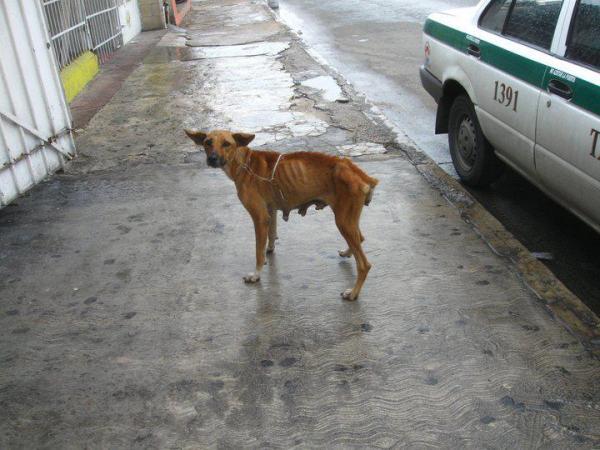 México, India, los perros y gatos callejeros