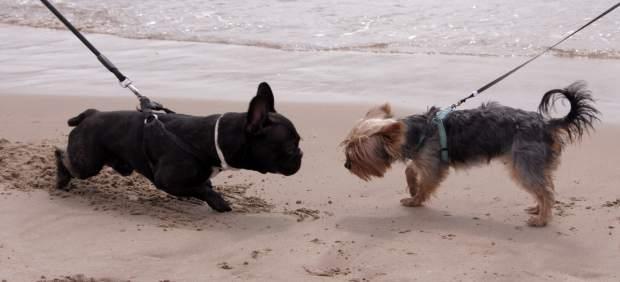 Aumenta un 32% el número de visitantes a la playa canina de Pinedo en julio