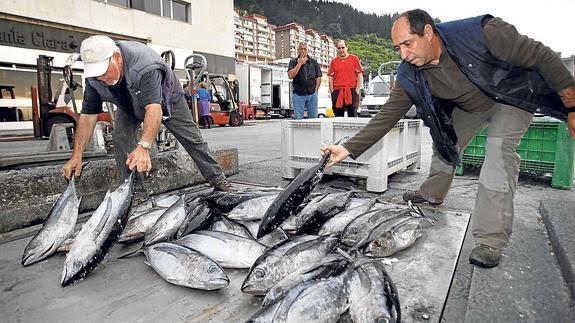 Cantabria trabajará por la viabilidad del sotck del bonito y el buen estado del mar
