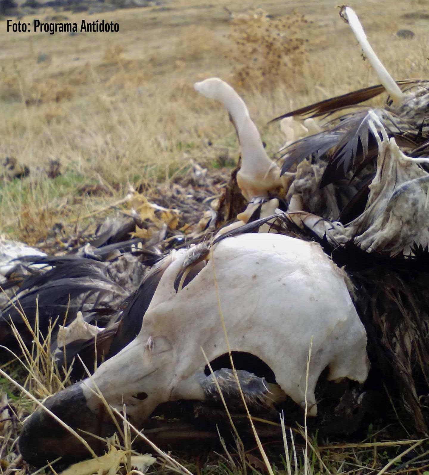 Muerte de aves protegidas en el vertedero del CTR Ávila-Norte