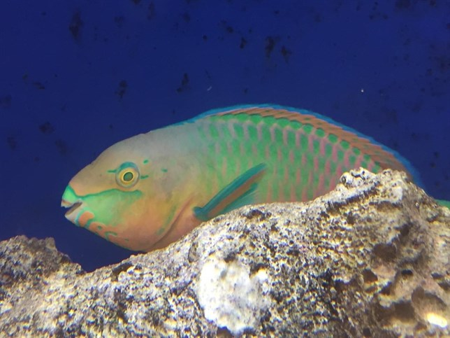 Aletas y sistema nervioso evolucionaron a la par en los peces