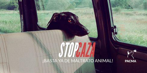 """PACMA pide una """"condena ejemplarizante"""" para el responsable de la muerte de nueve perros"""