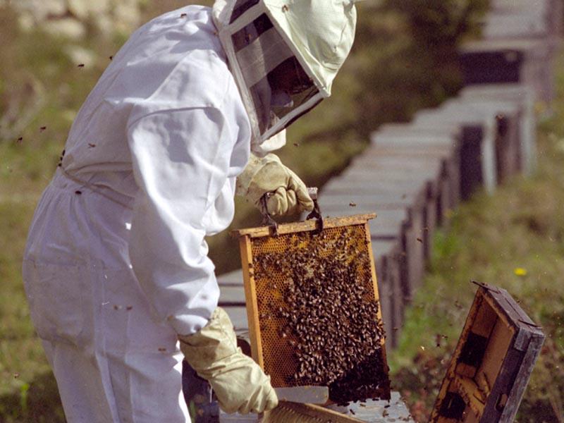 Los apicultores alemanes protestaran contra los plaguicidas