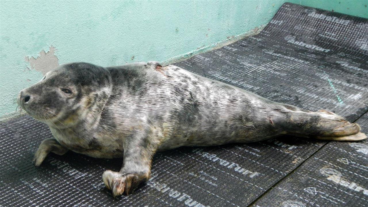 ¿Qué hacer ante la aparición en las costas de animales de fauna silvestre?