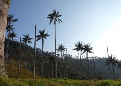 Colombia. XI Campaña Reconcíliate con la Naturaleza
